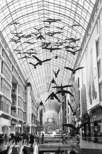 The Canada Geese displayed in the Toronto Eaton Centre