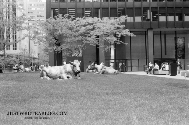 Bulls in the TD Centre Courtyard.
