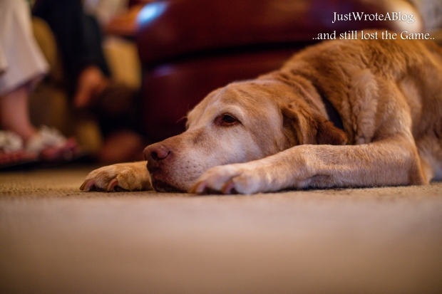 Our neighbor's dog, he's so sweet.  1/100 F/1.2 ISO 1600