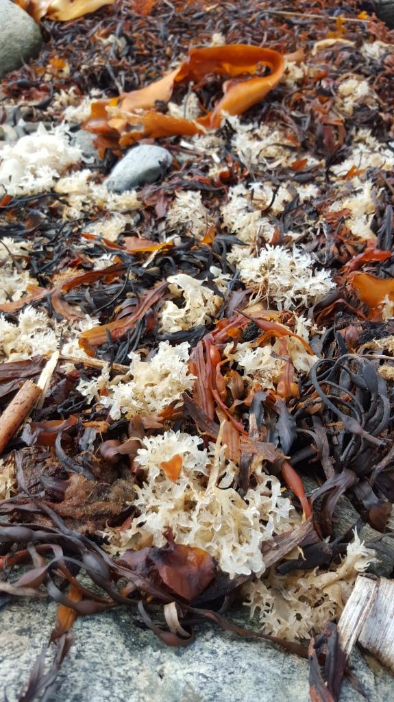 Seaside debris... Peaks Island, ME