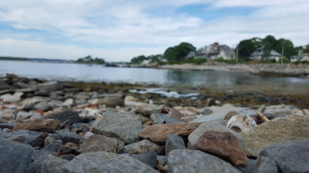 Seashell on the rocky shore, Peaks Island, ME